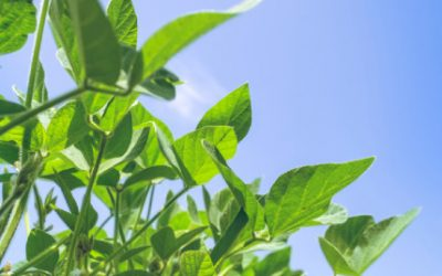 RezFree: What Is It and How Can It Promote Plant Growth?