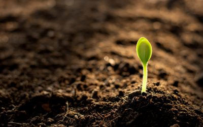 4 Important Benefits of Using RezFree for Your Soil