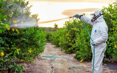 The Effect of Pesticides on Humans: What You Can Do About It