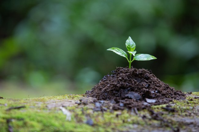 How Soil Salinity Affects Plant Growth and Production