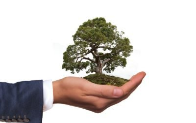 4 Effective Ways to Bring Your Green Business Ahead of Competitors