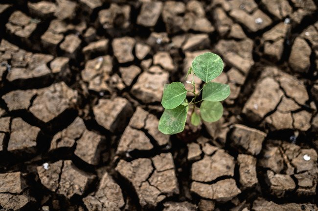 Understanding the Influence of Drought on Soil Health