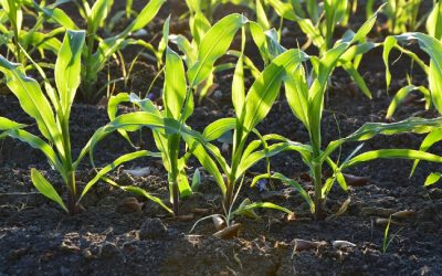 How to Use RezFree for Better Vegetable Growth